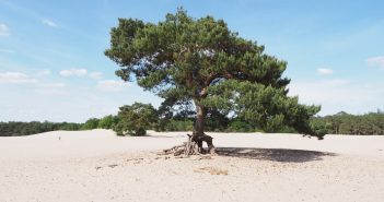 By bike through National Park in the Netherlands to the Military Museum and the Zoo Lonely tree on sand dunes of Soest