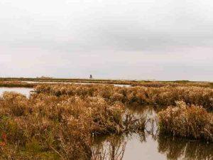 Nature Reserve Marker Wadden Tracking