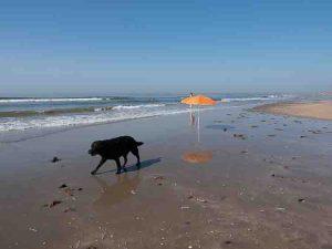 Rotterdam Beach and the Maeslantkering dogs